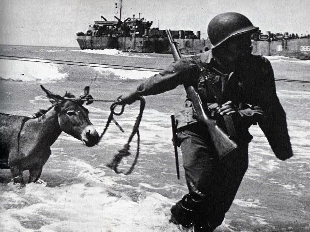 Desembarco de un burro Img61210