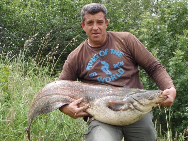 quelques poissons P6080010