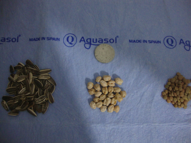 كيفية تحضير الحبوب المنقوعة للببغاوات . Dsc01712