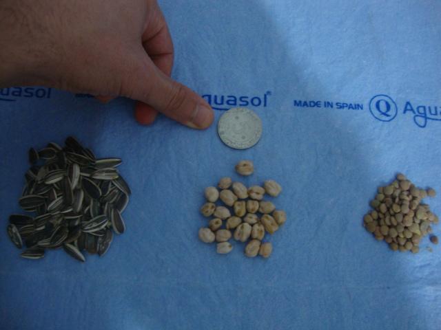 كيفية تحضير الحبوب المنقوعة للببغاوات . Dsc01713