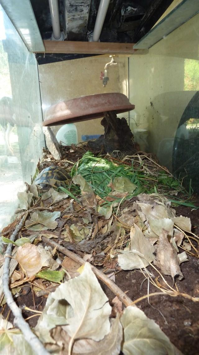 Quelle est cette tortue ? P1050012