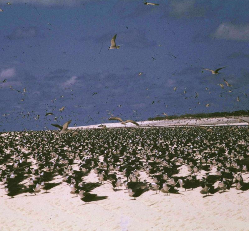 [Campagne] Iles éparses du canal du Mozambique Transp57