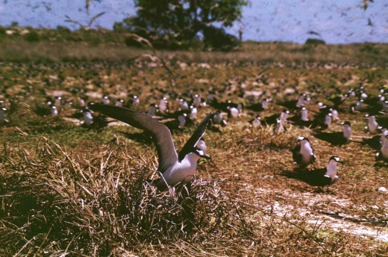 [Campagne] Iles éparses du canal du Mozambique Transp58