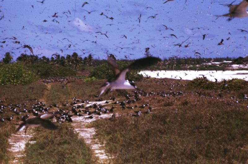 [Campagne] Iles éparses du canal du Mozambique Transp60
