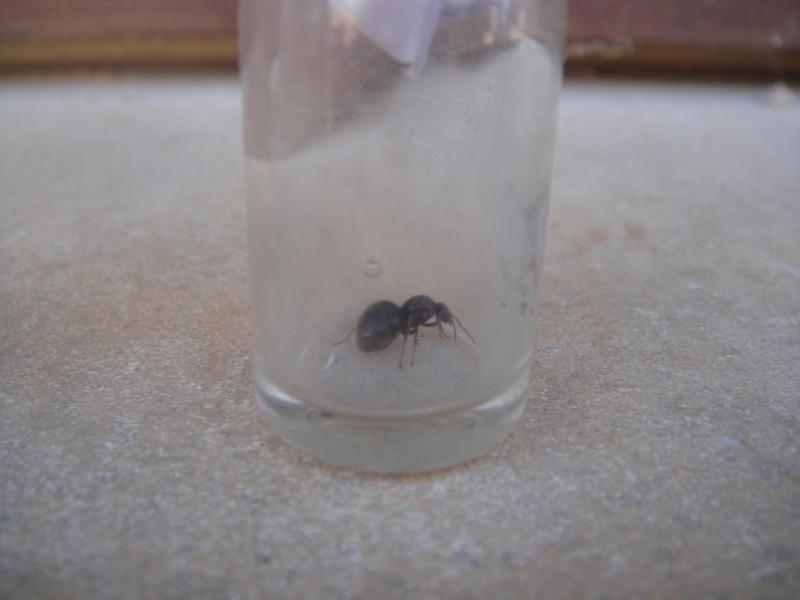 Suivi de mes fourmis  Ants_012
