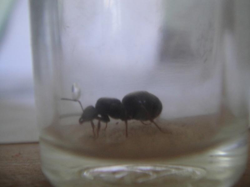 Suivi de mes fourmis  Ants_013