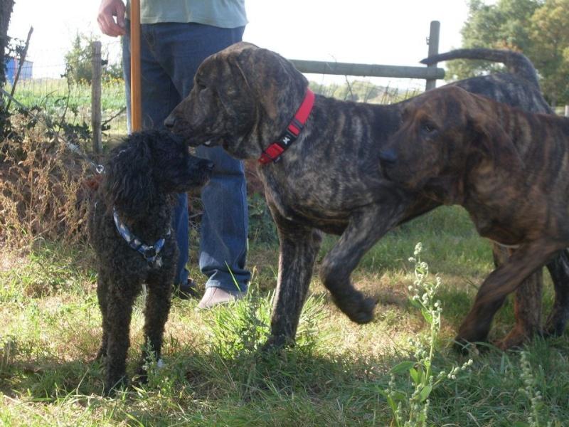 SOS pour 2 chiens squelettiques en fourriere association GALIA (85) 30375510