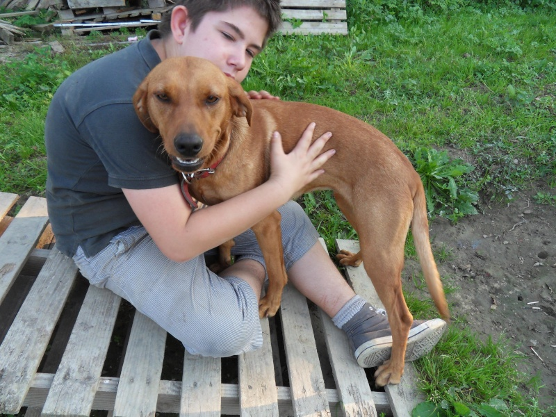 MIRZA chienne de chasse 1 an au refuge de l'association GALIA (85) Mirzza10