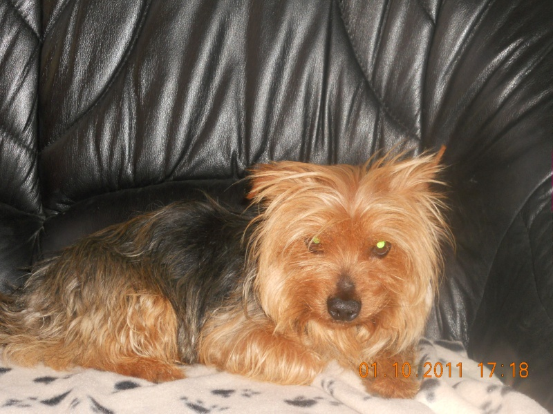 SKIPPY york male 10 ans urgence adoptions galia (85) Skippy10