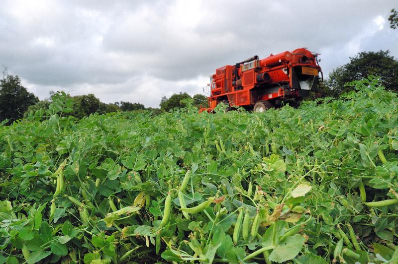 les légumes, du semis à la récolte Travau30