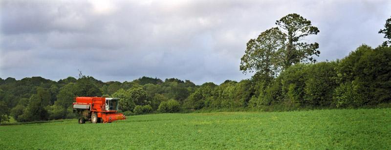 les légumes, du semis à la récolte Travau31