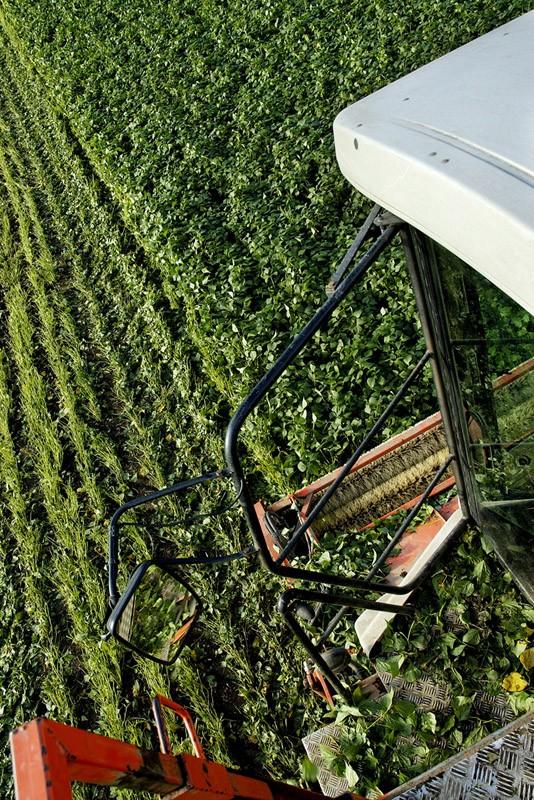 les légumes, du semis à la récolte Travau34