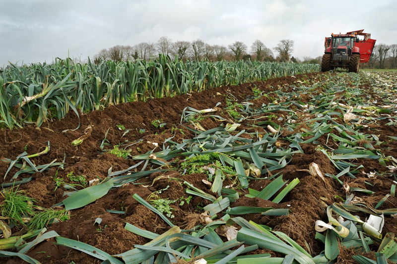 les légumes, du semis à la récolte Travau35