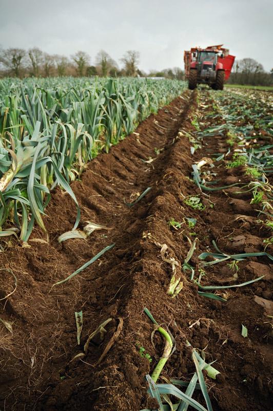 les légumes, du semis à la récolte Travau36