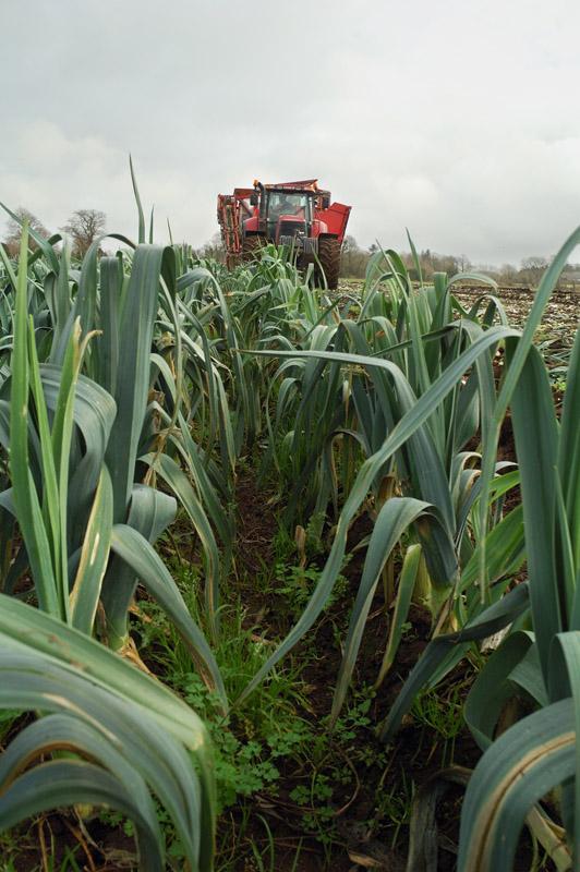 les légumes, du semis à la récolte Travau37