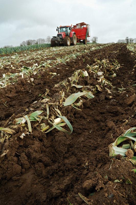 les légumes, du semis à la récolte Travau38