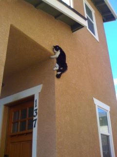 insolite Chat10