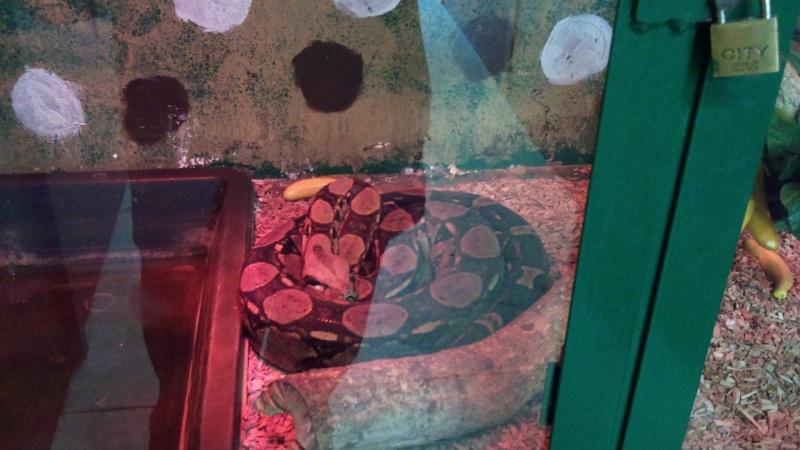 Expo itinérante de reptiles (Française) Dsc00813