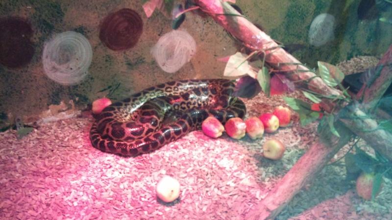 Expo itinérante de reptiles (Française) Dsc00814