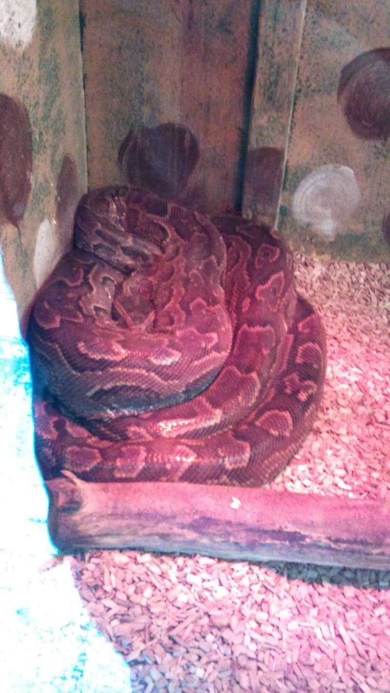 Expo itinérante de reptiles (Française) Dsc00817