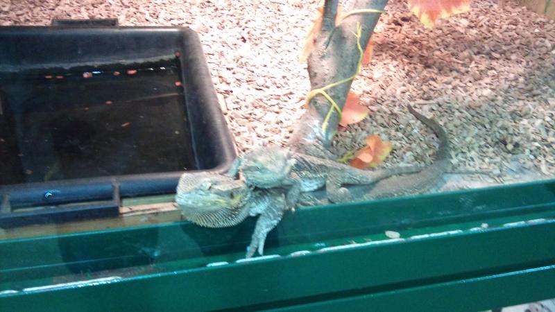 Expo itinérante de reptiles (Française) Dsc00818