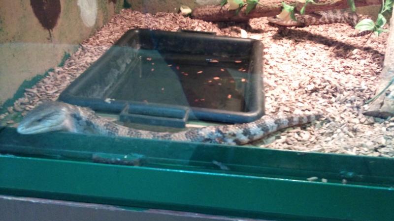 Expo itinérante de reptiles (Française) Dsc00819