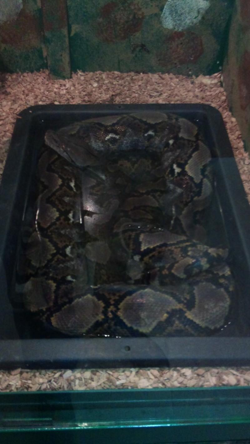 Expo itinérante de reptiles (Française) Dsc00823