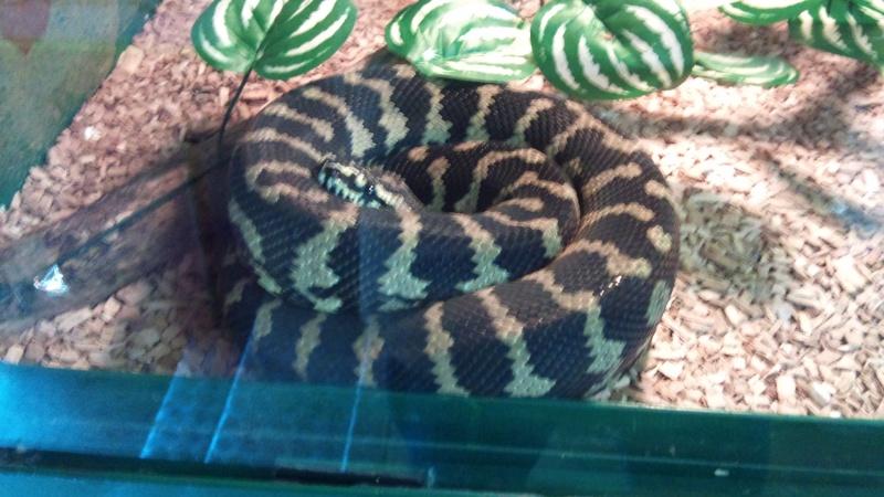 Expo itinérante de reptiles (Française) Dsc00827