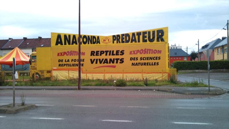 Expo itinérante de reptiles (Française) Dsc00912