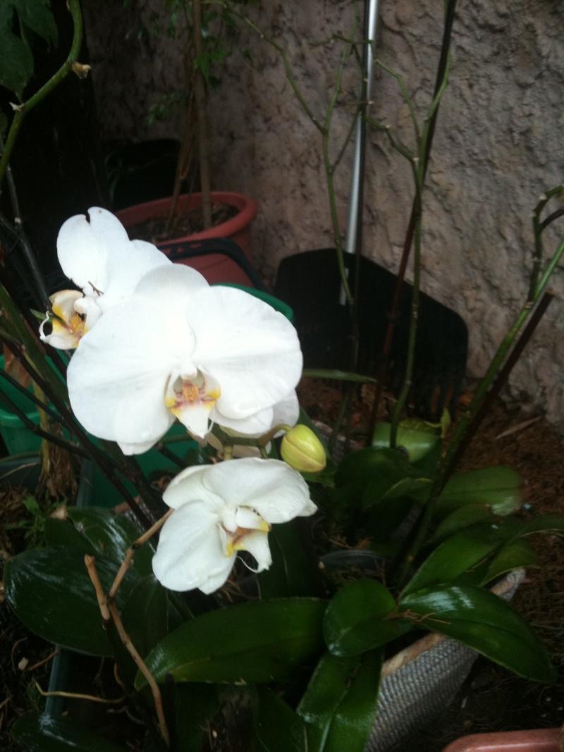 Orchidées. Octobr10