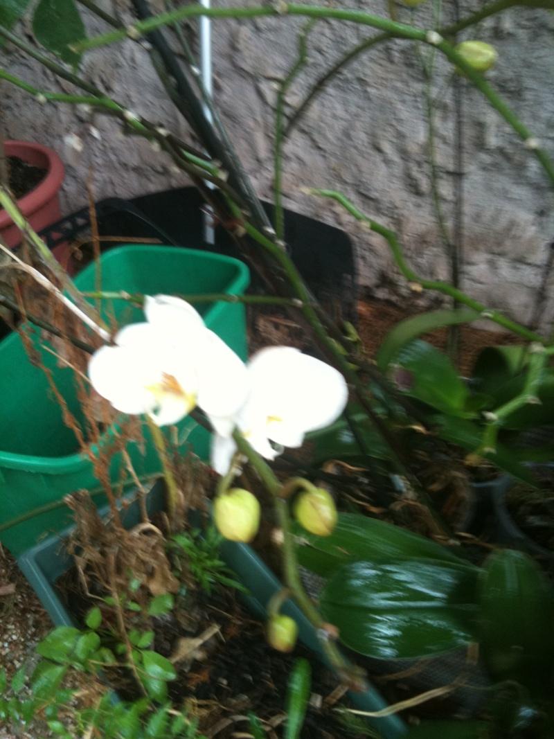 Orchidées. Octobr11