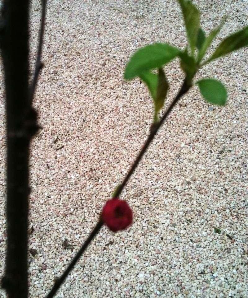 Prunus Prunus10