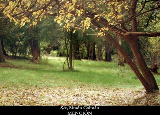 Los colores del otoño ´08 12213