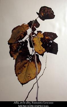 Los colores del otoño ´08 149p11