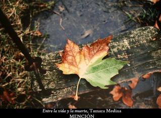Los colores del otoño ´08 15511