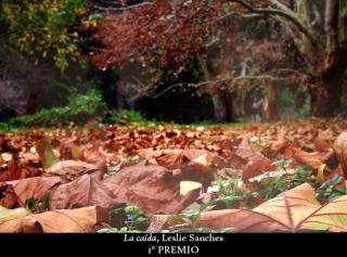 Los colores del otoño ´08 17611