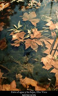 Los colores del otoño ´08 18p10