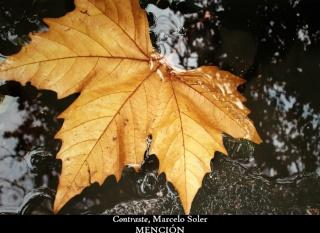 Los colores del otoño ´08 21711