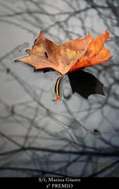 Los colores del otoño ´08 243pru14