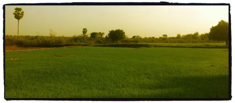 Cambodge -  Guesthouse Villa Koh Dach Img_6613
