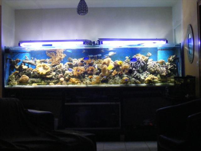 1 500 l eau de mer page 3 for Bac a poisson 500l