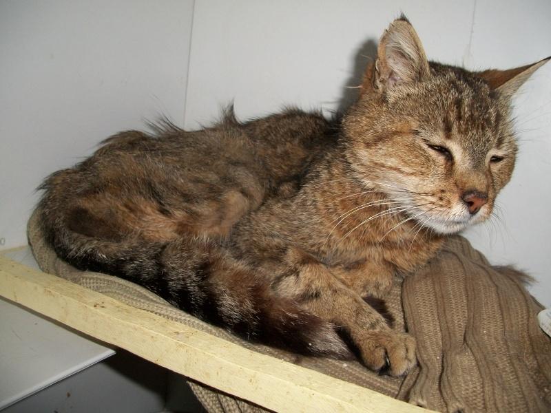 SOUCRé (chat mâle tigré castré) 01211