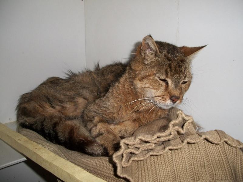 SOUCRé (chat mâle tigré castré) 01611