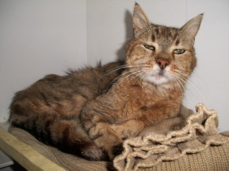 SOUCRé (chat mâle tigré castré) 01710
