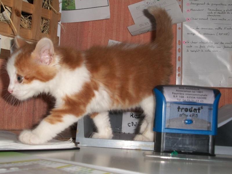 GUISMO (chaton mâle roux et blanc) 04812
