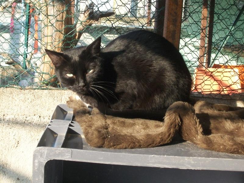 PEPITO (mâle européen noir) 100_9432