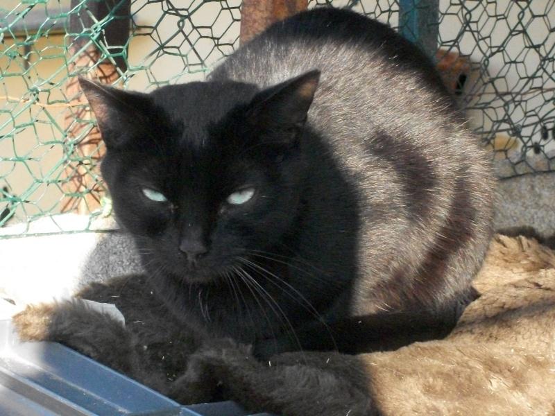 PEPITO (mâle européen noir) 100_9433