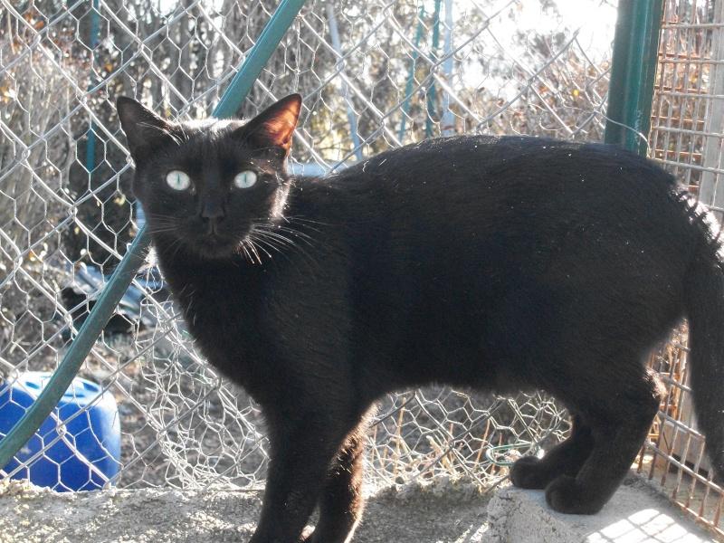 PEPITO (mâle européen noir) 100_9740