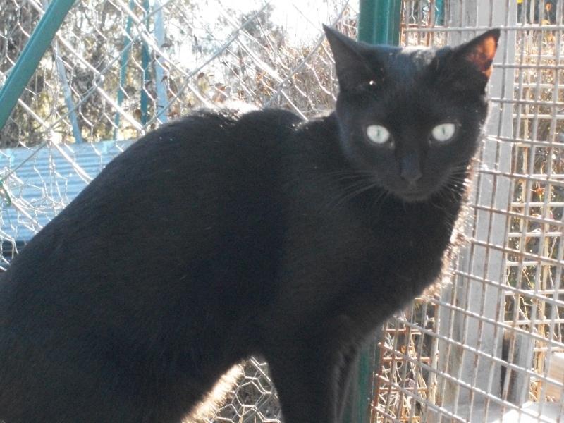 PEPITO (mâle européen noir) 100_9744