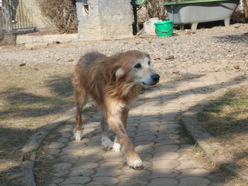 KIMY (croisé berger) 101_0016